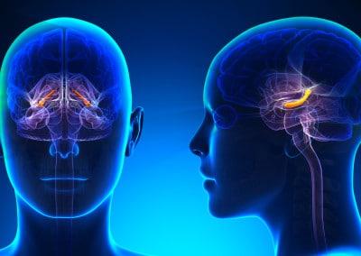 Hippocampus, der Türsteher zur Schaltzentrale Gehirn
